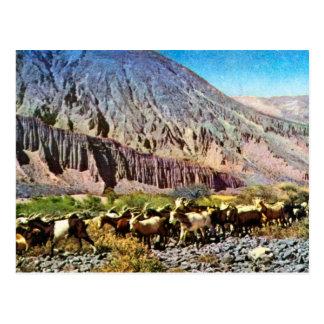 Vintage, Argentina, erosão da rocha, rebanho das Cartão Postal