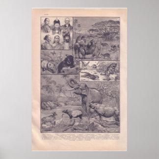 Vintage Ásia 1920 histórica Poster