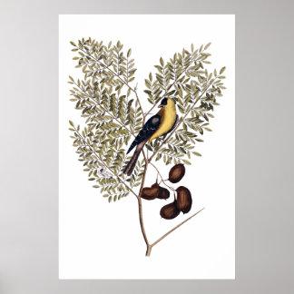 Vintage botânico com pássaro amarelo pôster