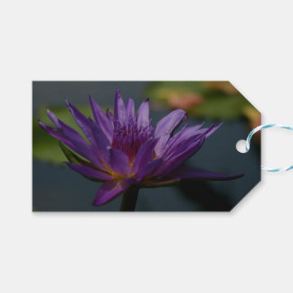 Waterlily roxo