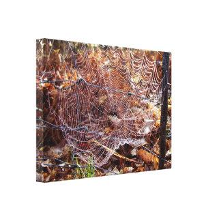 Web do impressão europeu das canvas da aranha de