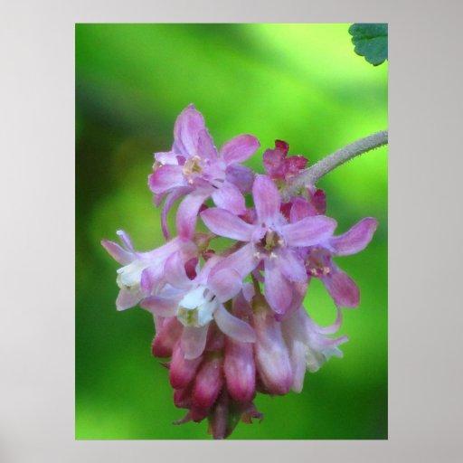 Wildflower atual cor-de-rosa posteres