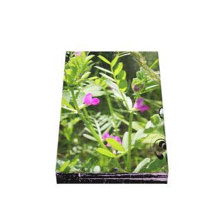 Wildflower da ervilhaca de primavera impressão de canvas esticada