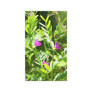 Wildflower da ervilhaca de primavera impressão em canvas
