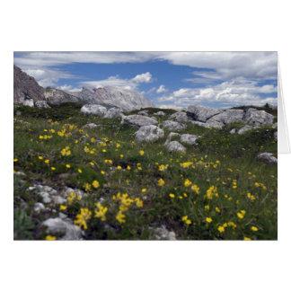 Wildflowers da dolomite cartão comemorativo
