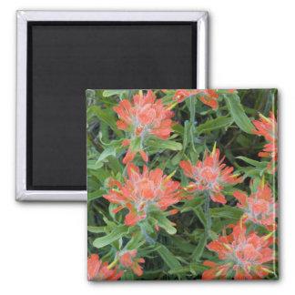 Wildflowers do pincel indiano no muitos ímã quadrado
