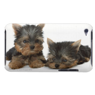 Yorkshire terrier capa para iPod touch