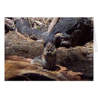 Yosemite no primavera:  Um amigo peludo Cartão De Nota
