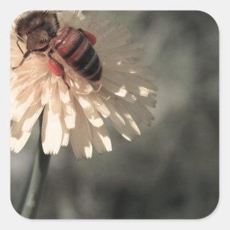 Zangão na flor adesivo quadrado