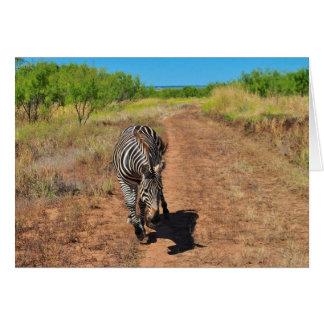 Zebra de arrasto cartão
