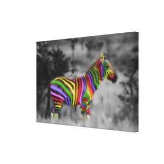 Zebra do arco-íris impressão em tela canvas