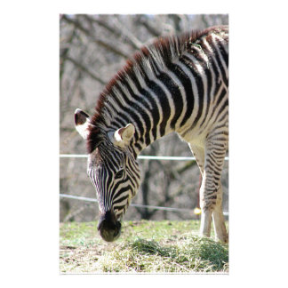Zebras de alimentação papelaria